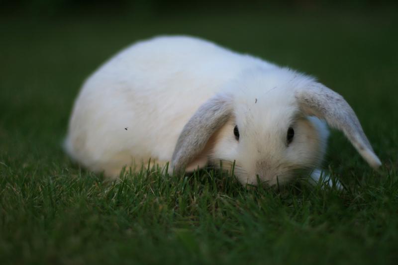 Bunny von D.