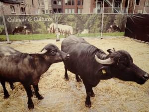 Buffels @ Proef Eet Enschede