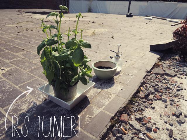 tuinieren-zonder-tuin
