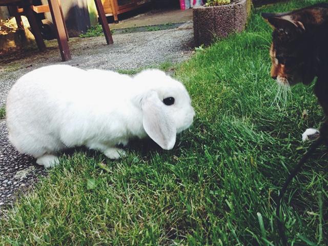 Bunny von D & Muis