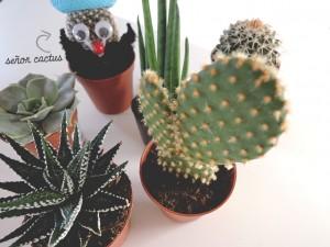 DIY planten in kopjes