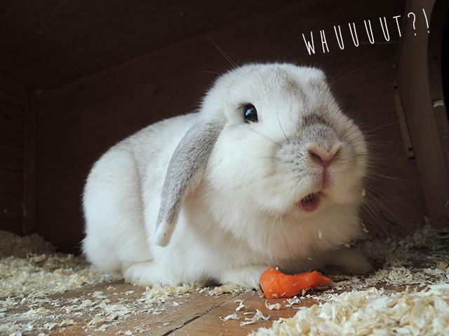 bunny von d 4