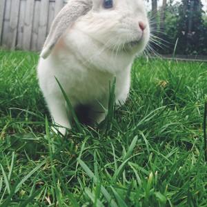 Een dag uit het leven van Bunny von D