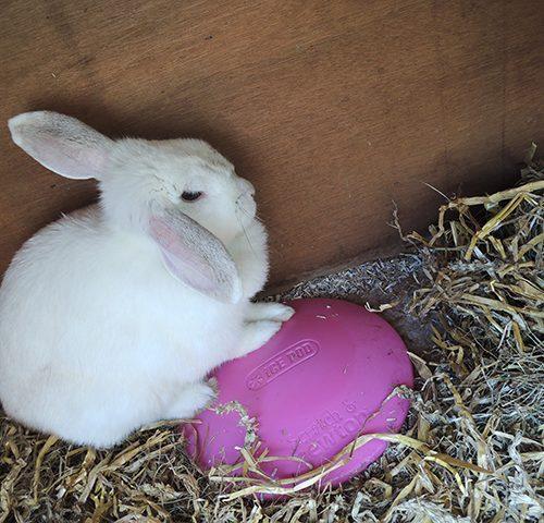 bunny von d en de icepod