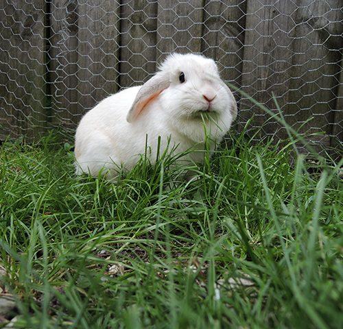bunny von d in het gras