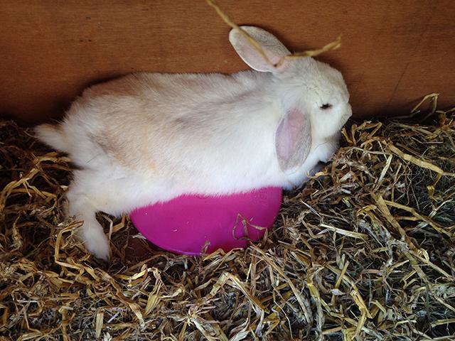 bunny von d op de icepod