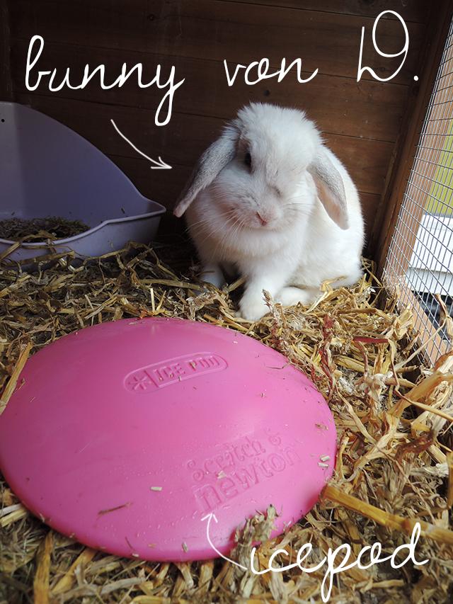 icepod voor konijnen