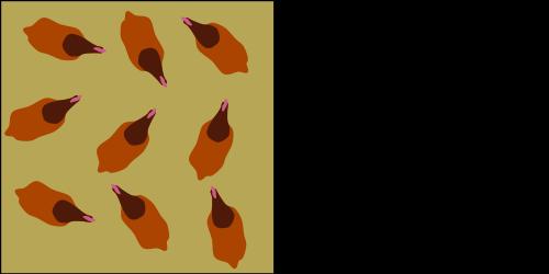 scharrelkip