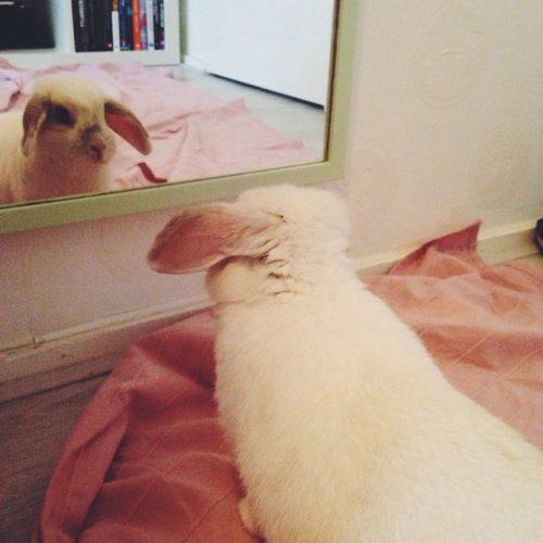 Leukste konijn ooit