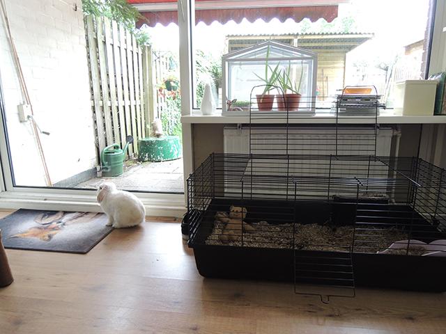 nieuwe woonkamer inrichten  consenza for ., Meubels Ideeën