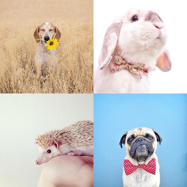 dieren op instagram