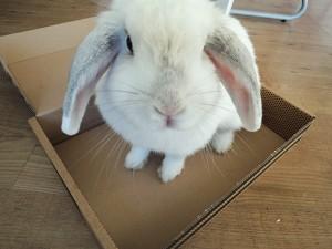 bunny von d