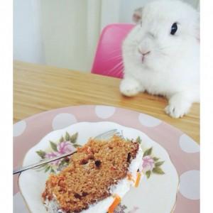 bunny von d eet worteltaart