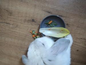 voorgerecht konijn