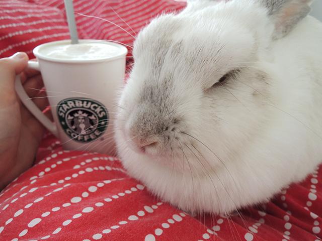 koffie en konijn