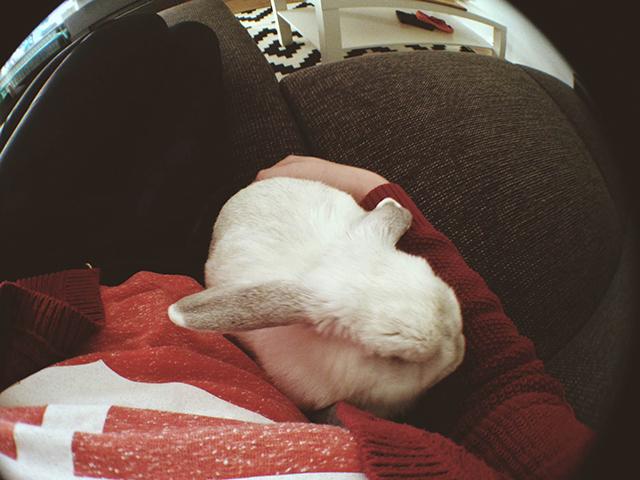 konijn knuffelen