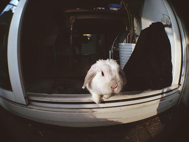 konijn naar buiten