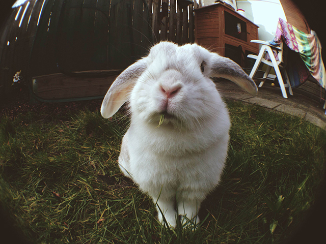 konijn schrikt