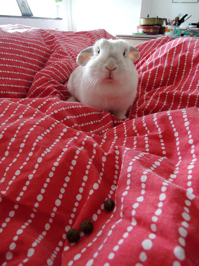 konijnenkeutels