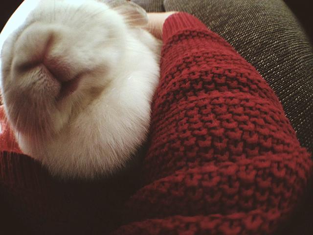 konijnenkusje