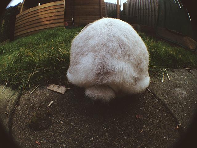 konijnenstaartje