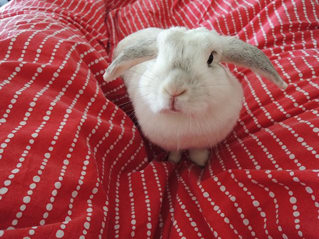 liefste konijn ooit