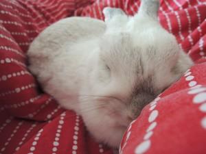 slapend konijntje