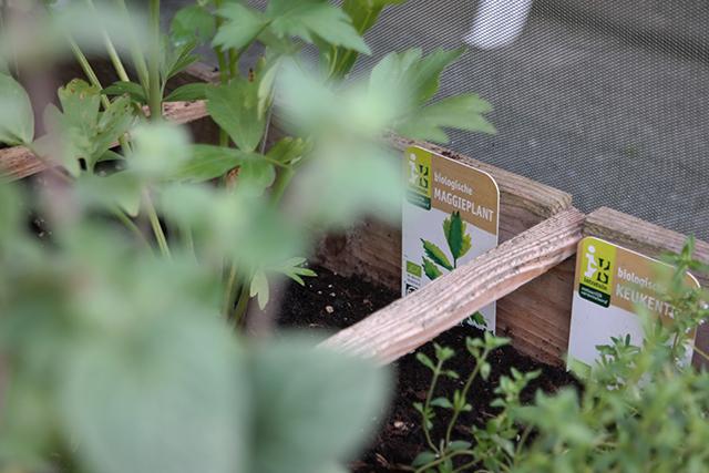maggieplant