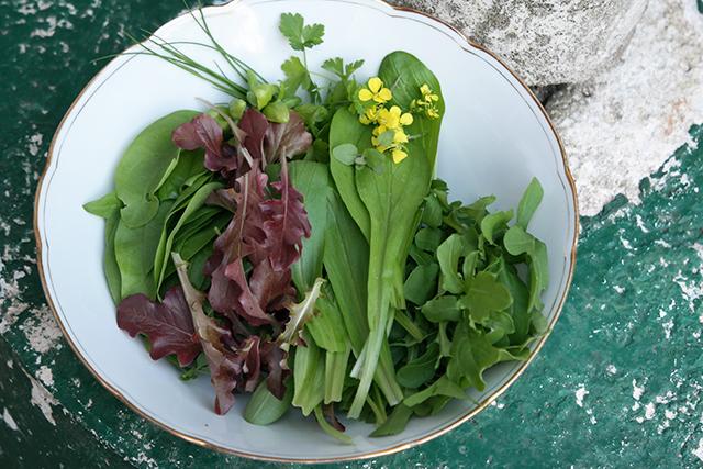 Ook heb ik tussendoor al een paar keer sla kunnen plukken. Een salade met versgeplukte sla is zo veel lekkerder! Ik denk dat ik in het vervolg alleen nog maar sla ga telen. Dat groeit tenminste lekker snel en ik heb er veel plezier van omdat ik zo vaak salades maak.