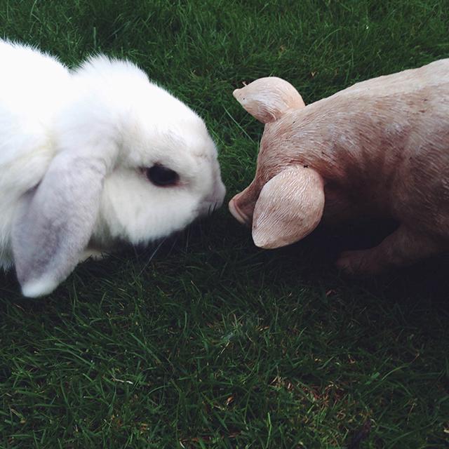 bunny en big