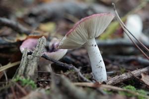 natuur wandeling in Het Witte Veen bij Buurse