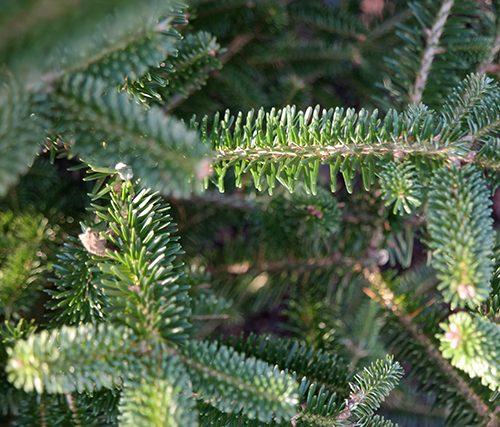 duurzame kerst