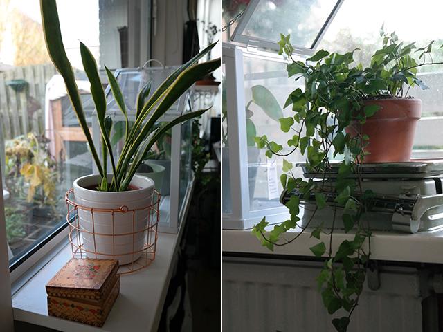 luchtzuiverende planten