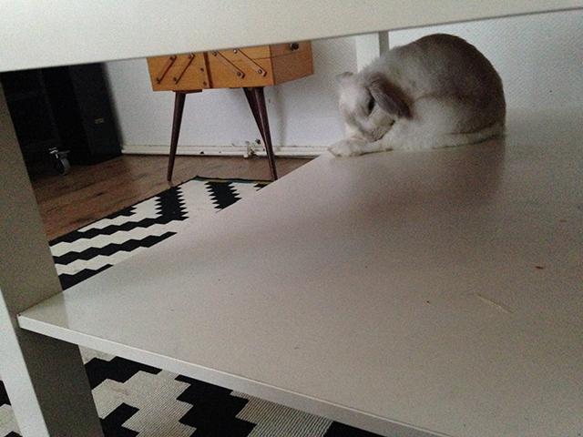Bunny yoga in de salontafel, niets was haar te gek.