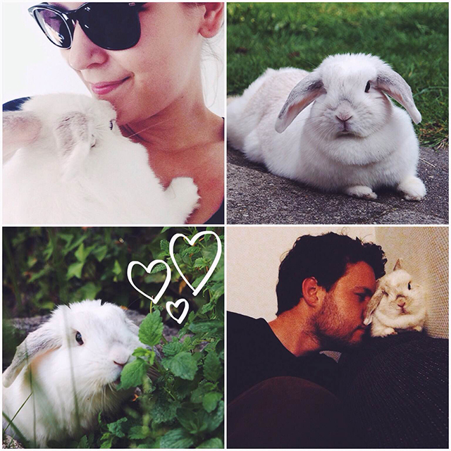 collage bunny von d