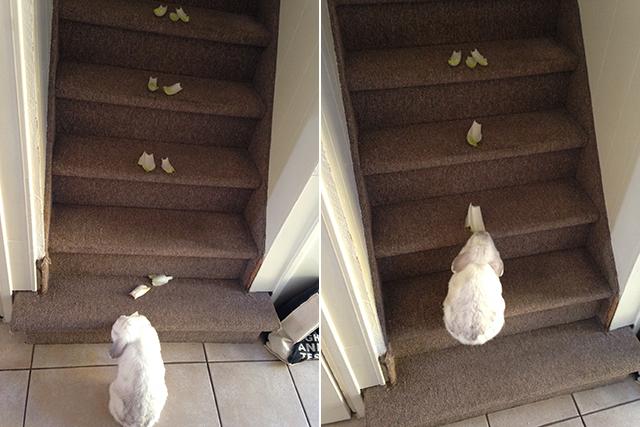 konijn leren traplopen