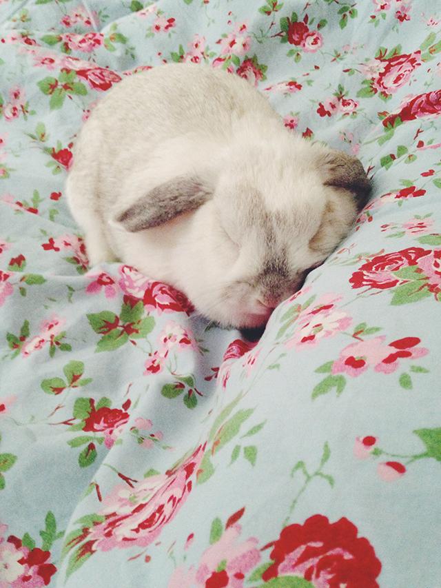 slapende bunny von d