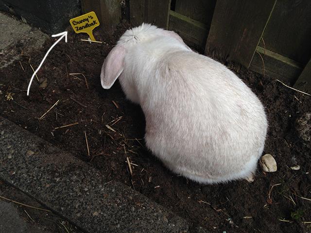Toen ze in dit stukje tuin steeds weer ging graven en ik er eigenlijk bloemen wilde zaaien, maar het uiteindelijk maar omdoopte tot 'Bunny's zandbak'.