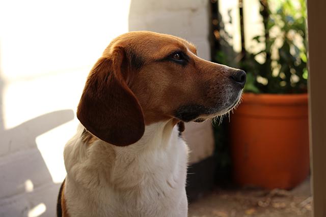 een hond uit het asiel