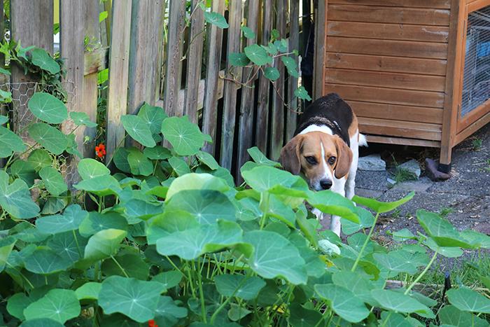 maandag-tuin