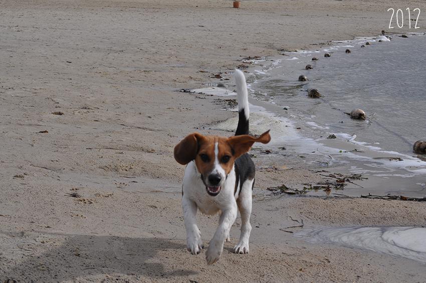 olliebol-op-het-strand