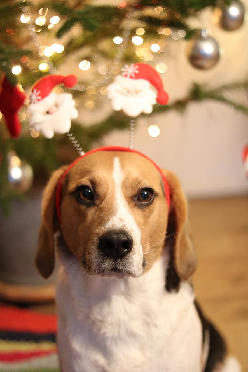 ollie de kerstelf