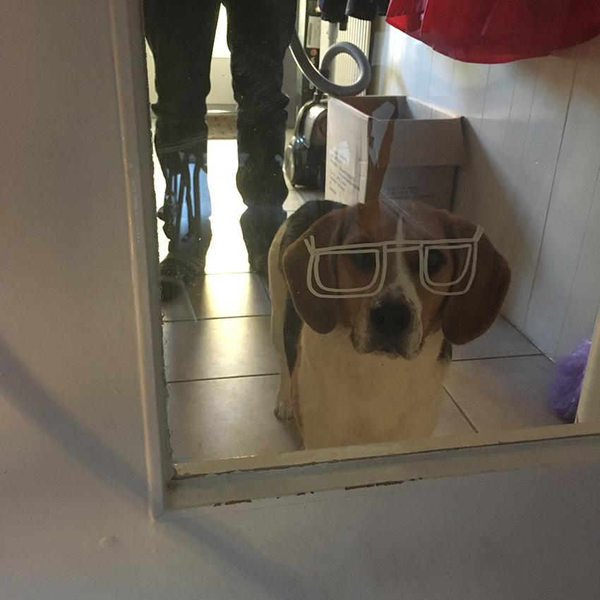 Ollie met bril