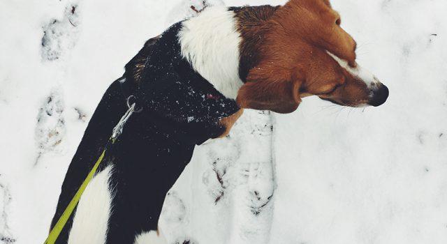 in de sneeuw met ollie