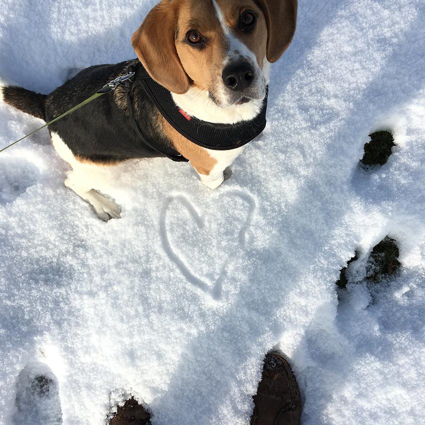 ollie in de sneeuw