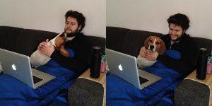 Ollie de beagle