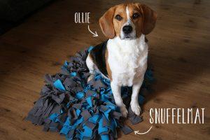 DIY: Snuffelmat maken voor je huisdier
