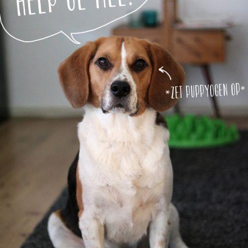 Teken de petitie voor dierproefvrij onderzoek