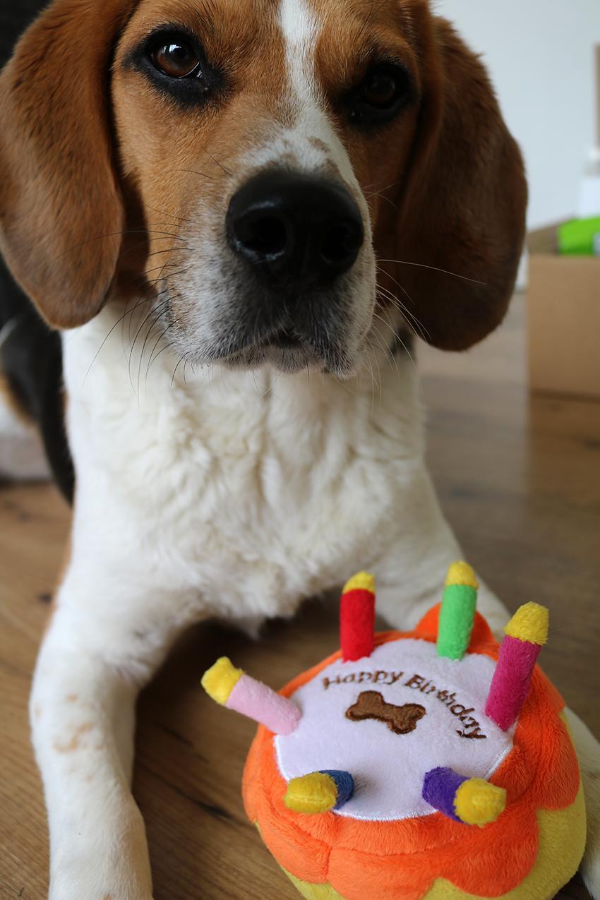 Win een verrassingspakket voor je huisdier